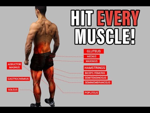 The Best Science-Based Lower Body Workout for Growth (Quads/Hams/Glutes)