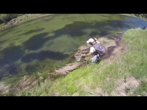 Kern River Fly Fishing Golden Trout PackTrip
