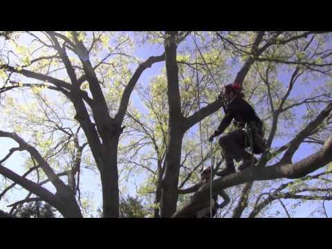 Large Tree Pruning