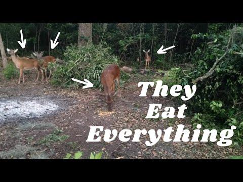 Effective Homemade Deer Repellent