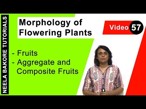 Morphology of Flowering Plants - Fruits - Aggregate and Composite Fruits