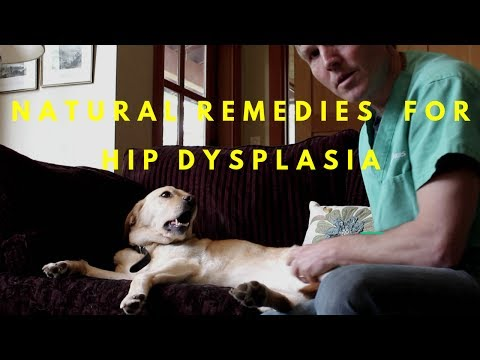 Natural Remedies For Hip Dysplasia