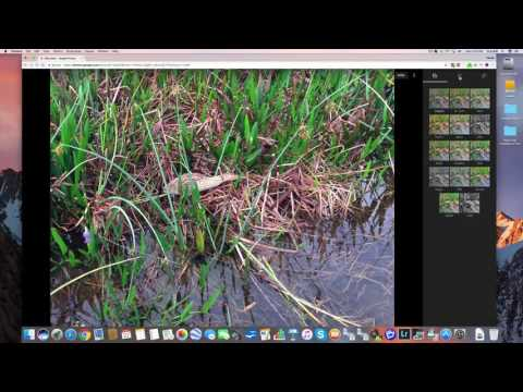 How To Edit In Google Photos Part 1