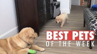 Best Pets of the Week | November 2018 Week 3