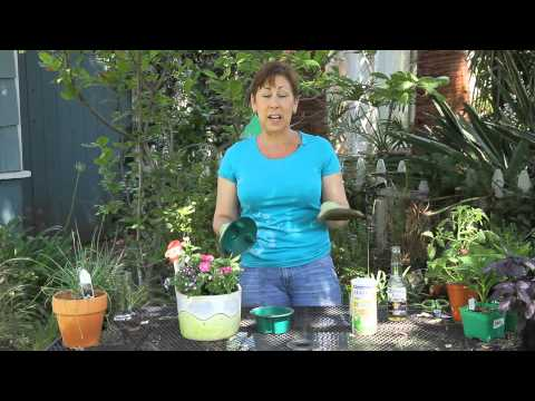 How to Keep Snails & Slugs Out of the Planters : Garden Space