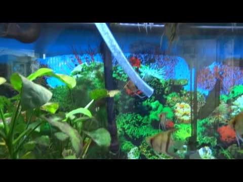 How to instantly cycle a fish tank  NO WAIT TIME!