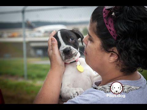 Holly's Puppies Saved From Death - Fly to New Homes