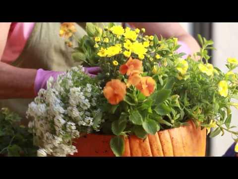 How to Make a Pumpkin Centerpiece with Teena