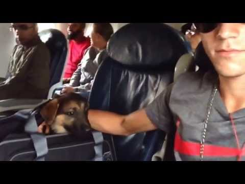 German shepherds & the ranch-flying puppy