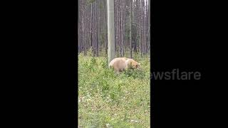 Incredibly rare 'spirit bear' spotted in Canadian wild