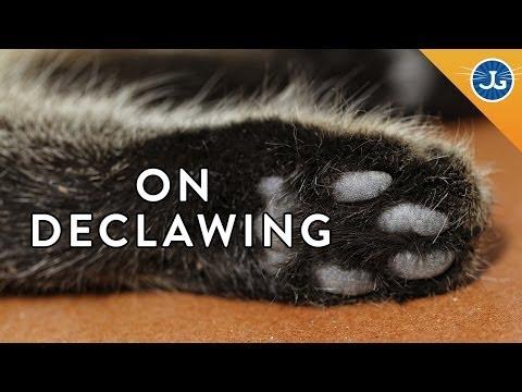 Declawing: Jackson Galaxy Just Says No!