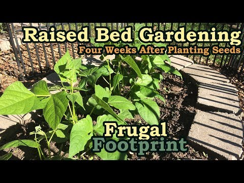 Raised Bed Gardening - Four Weeks After Planting Seeds - First Harvest