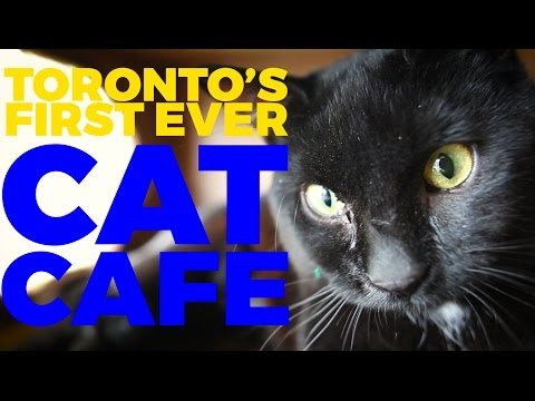 Adorable cats: Toronto's first ever cat cafe