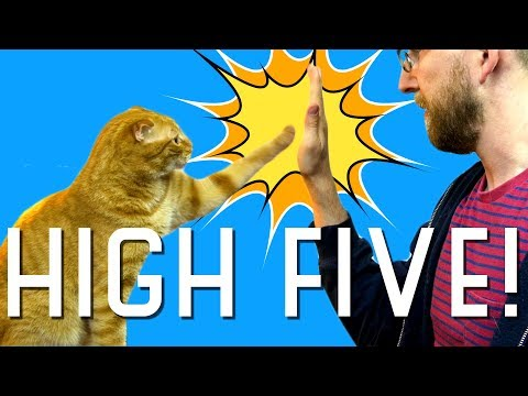 I taught my cat how to high five!