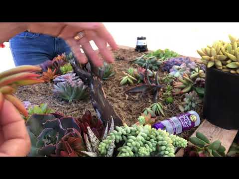 How to Create a Beautiful Succulent Wall Hanging