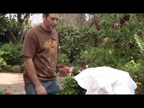 Gardening Geraniums & Winter Care