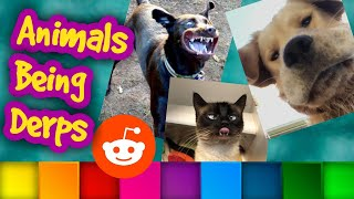 Animals Being Derps - Animal Fail Compilation - Top Reddit Posts