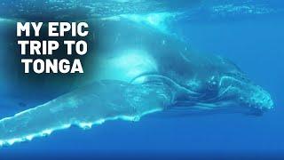 My Epic Trip To Tonga | Ryan Wilkes