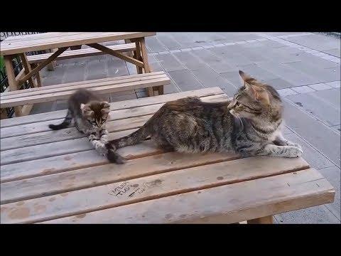 Mama Cat's Reaction to her kitten, When Kitten biting her tail