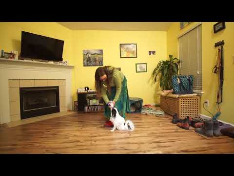 Hestia's heel training 010418