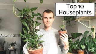 Top 10 Houseplants   Autumn 2018