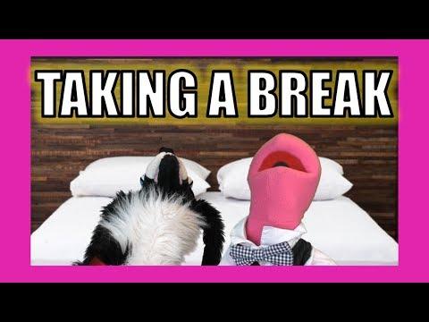 Taking a Break:  Sullivan Spaniel