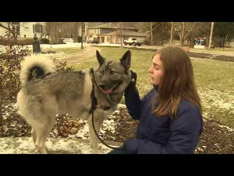 Mich. dog gets unemployment benefits