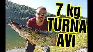 7 Kilo Canlı Balık ile TURNA Avı Armağan Barajı - Kırklareli