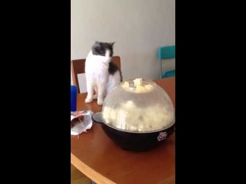 Cat has uneventful reaction to popcorn maker