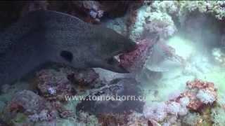 RARE! Moray Eel vs Stone Fish