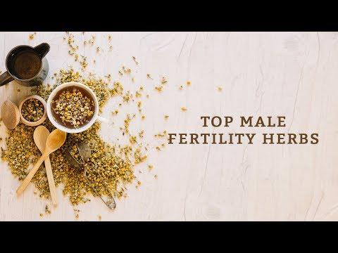 Top Male Fertility Herbs
