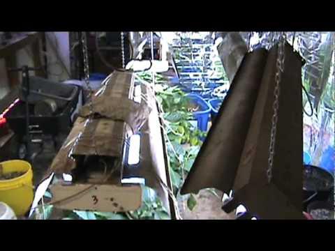Basement Garden Update Oct 02/2011