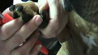 How To Find The Quick And Clip Nails How To Dremel Black Nails On A L