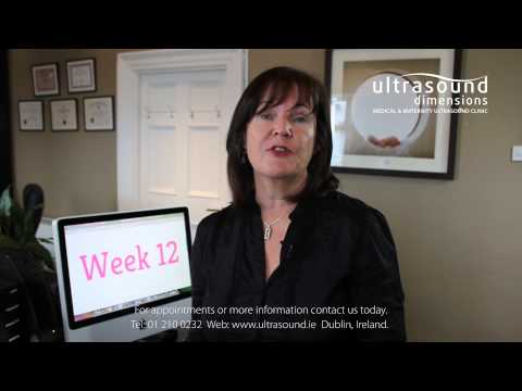 12 Weeks Pregnant - Your 12th Week Of Pregnancy
