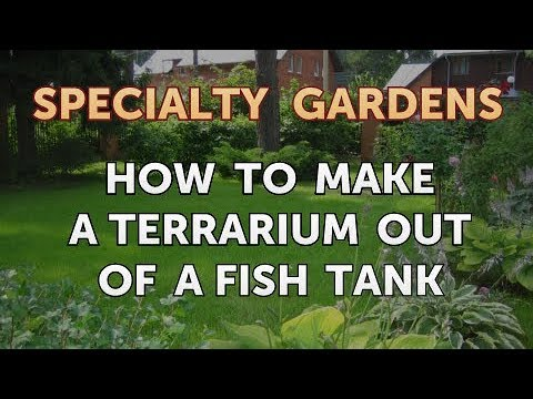 How to Make a Terrarium Out of a Fish Tank