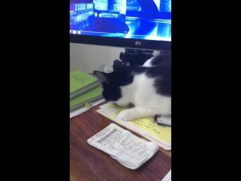 Cat NOM NOM Work Papers