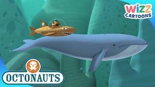Octonauts | Big Sea Creatures | Compilation | Wizz Cartoons