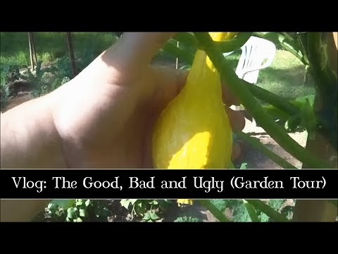 Aug 24th, Full Garden Tour: The Good, Bad and Ugly