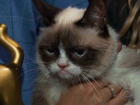 Grumpy Cat, meet Lil Bub; Lil Bub, meet Grumpy Cat