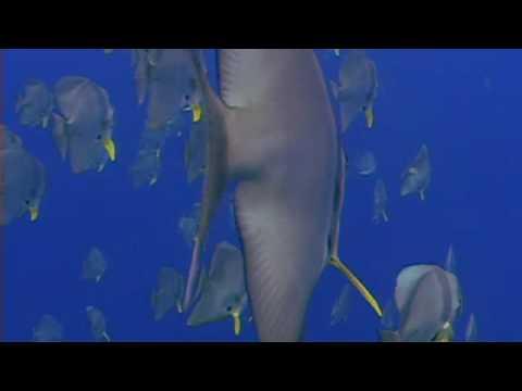 Diving in Christmas Island (Indian Ocean - Australia)