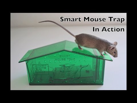 Smart Mouse Trap In Action - PETA Recommended Humane Live Catch Mouse Trap