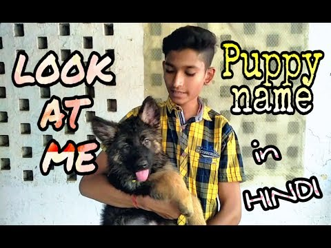 How to teach puppy its name or