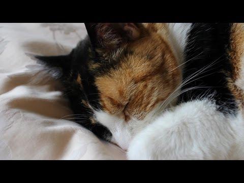 Molly the Cat Sleeping Peacefully