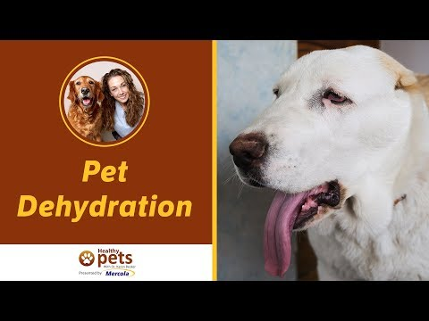 Dr. Becker Discusses Pet Dehydration