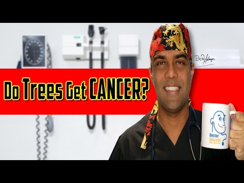 Do Trees Get Cancer? Yikes!