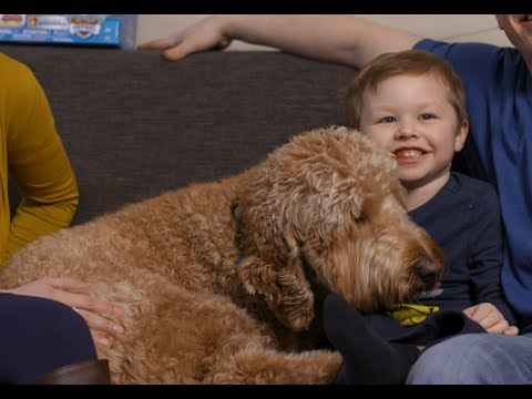 Cooper's wish to have a service dog
