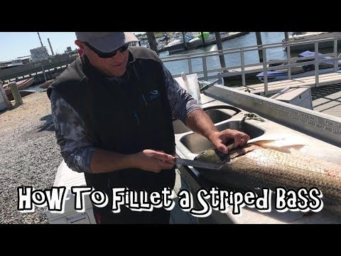 How to Fillet a Striped Bass the Easy Way