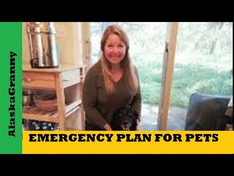 Emergency Plan For Pets