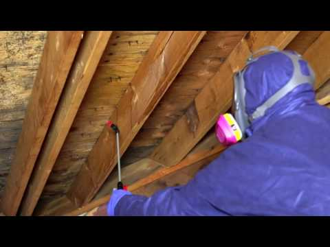 Mold-X2 Kills Mold in Crawl Spaces and Attics & Helps Prevent Future  Growth.