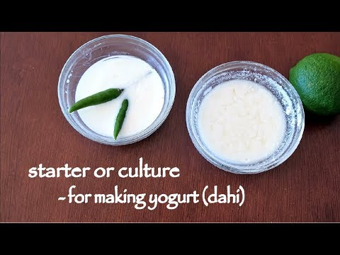 How to make Yogurt Culture/Starter at home    dahi Jaman recipe   Two types of yogurt starters